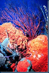 coral-reefs-decline-worldwide