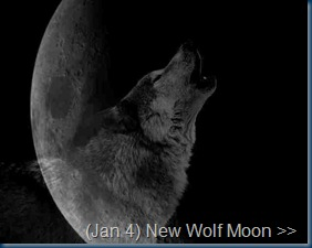 New_Moon_Wolf