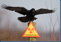 Raven and exclusion zone radiation warning