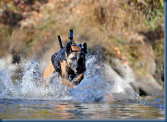 SEAL DevGru team War Dog in Action