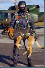 The Dog That Cornered Osama Bin Laden ... not your standard K9...nor is the gear‏ (3/6)