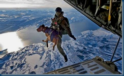 Parachuting in K9 Tactical Assault Suits