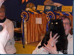 Overall Best in Show Winner_Black British Shorthair