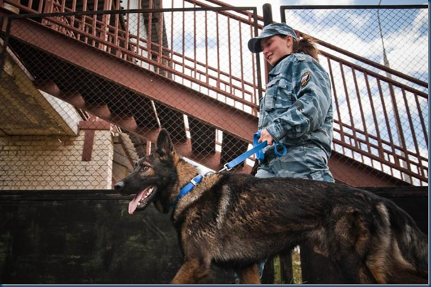 Federal Border Guards - Russian Military Dogs bred to defend borders. (1/6)