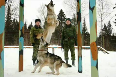 Federal Border Guards – Russian Military Dogs bred to defend borders ...