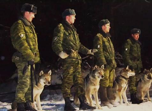 Federal Border Guards Russian Military Dogs Bred To