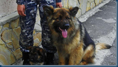 Federal Border Guards - Russian Military Dogs bred to defend borders. (5/6)