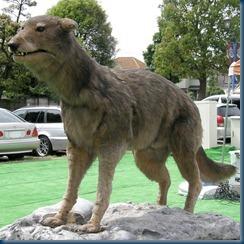 Japanese Wolf