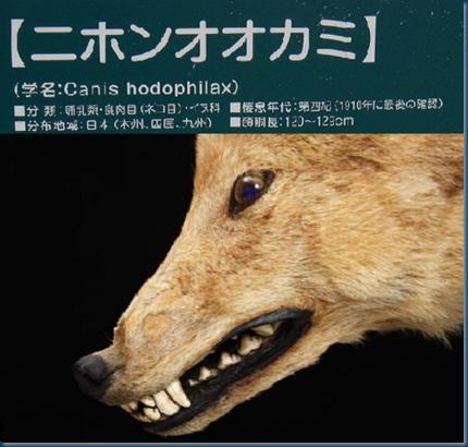 Canis hodophilax