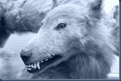 Japanese Ezo Wolf