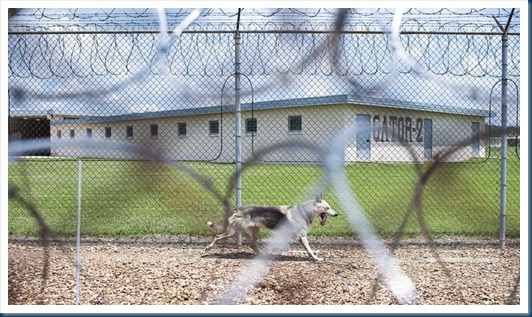 Prison Dogs on Patrol in Angola