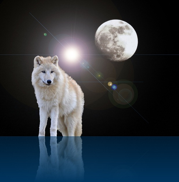 Moon Wolf Dreams_© Europa's Icewolf 2013