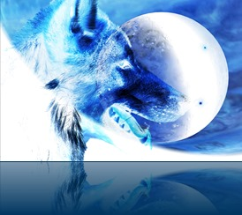 New Year Wolf_copyright Europa's Icewolf 2014