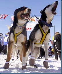Iditarod Sled Dog Race_Photo Credit(AP Photo-Al Grillo)_newsminer.com