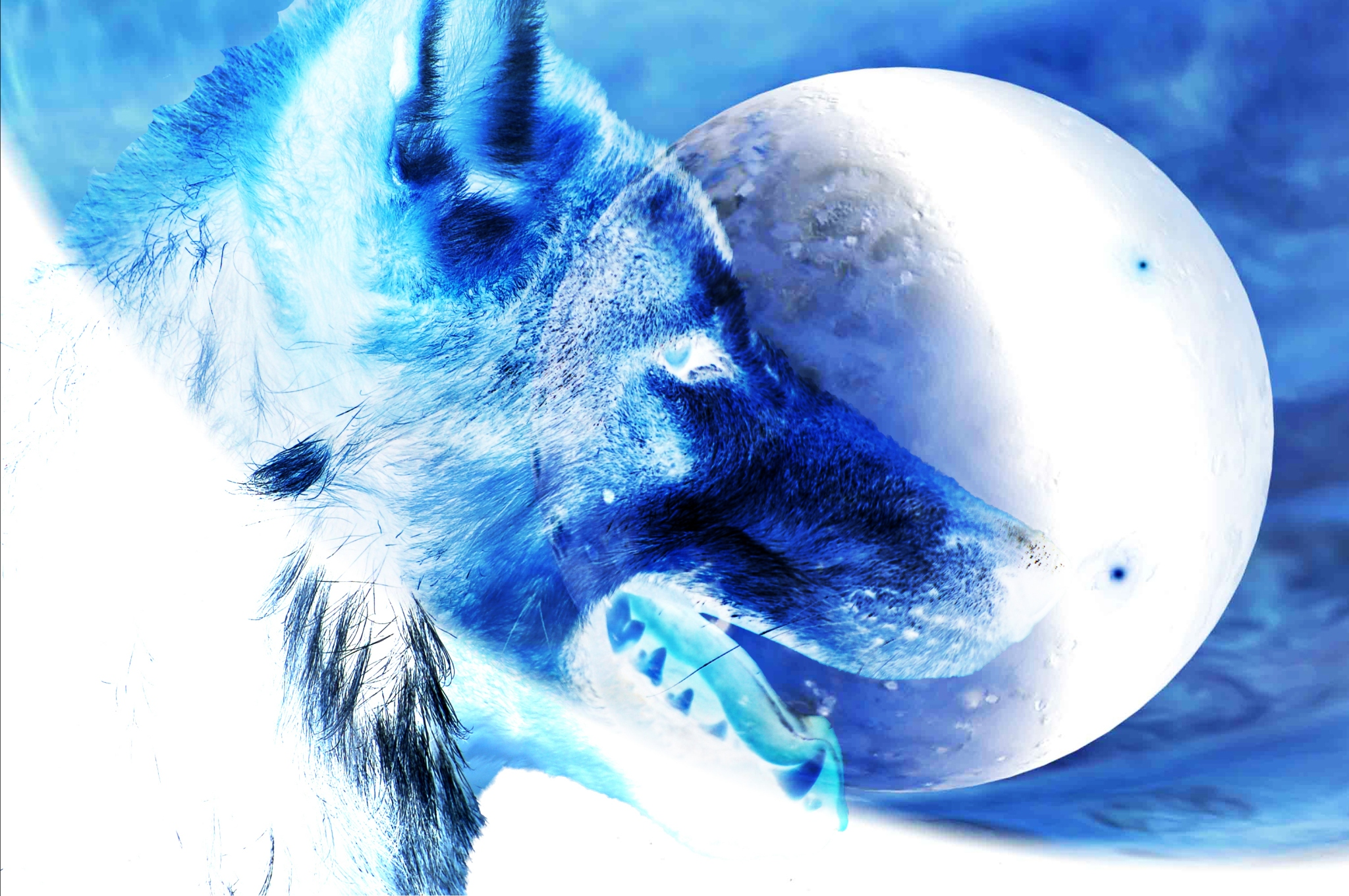 Red_Wolf_Creek_Inverted